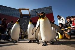 penguin_p