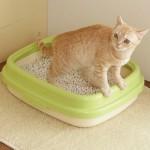 猫のうんちをトイレに流してはいけない理由は?処理方法も