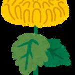 事故現場に置く花(献花)の種類は?お供え物はいつまで置くの?